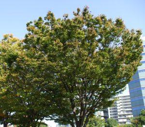 樹木の参考写真